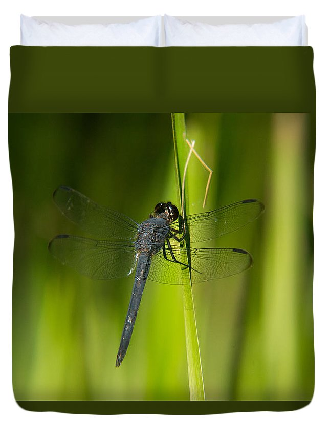 Blue Duvet Cover featuring the photograph Blue Dragonfly 12 by Douglas Barnett