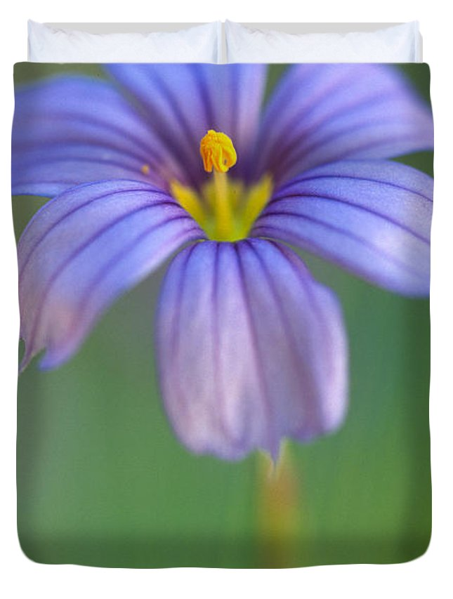 Flowers Duvet Cover featuring the photograph Blue Eyed Grass 2 by Kathy Yates