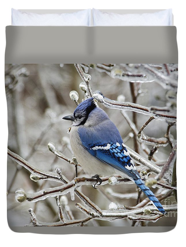 Blue Duvet Cover featuring the photograph Blue Jay - D003568 by Daniel Dempster
