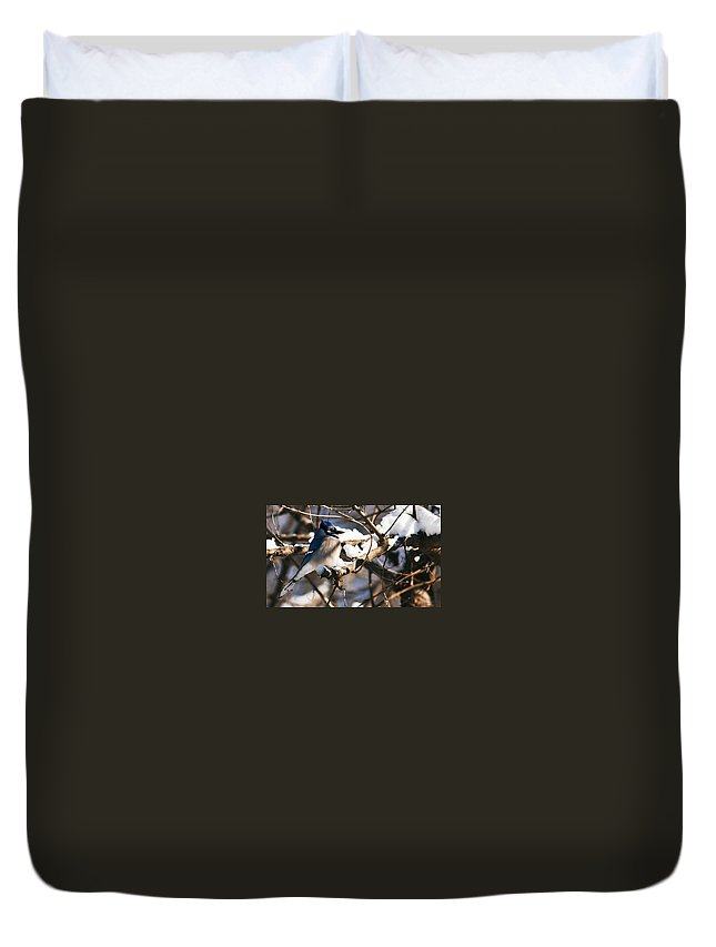 Heron Haven Duvet Cover featuring the photograph Blue Jay Staying Warm by Edward Peterson