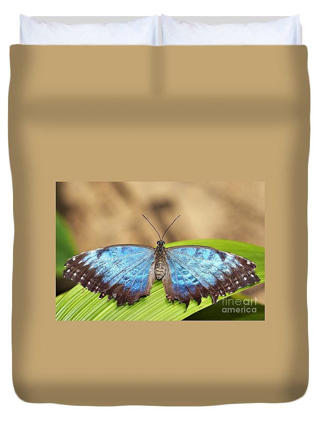Butterfly Duvet Cover featuring the photograph Blue Morpho Butterfly by Michal Boubin