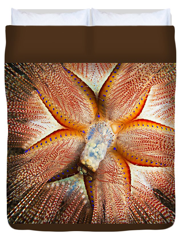 Animal Duvet Cover featuring the photograph Blue-spotted Sea Urchin IIi by Dave Fleetham - Printscapes