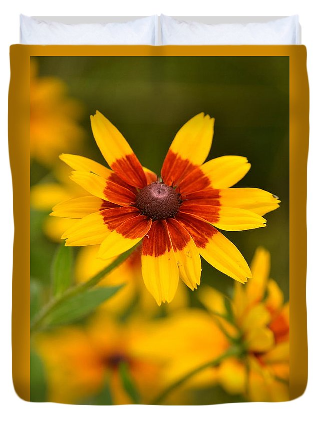 Flower Duvet Cover featuring the photograph Blush-eyed Susan by JD Grimes