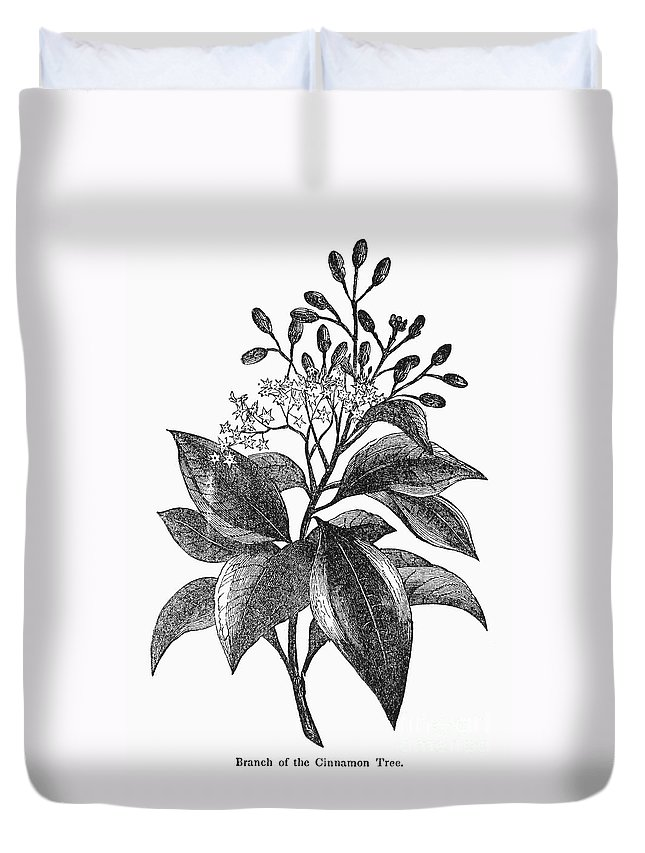 Biology Duvet Cover featuring the photograph Botany: Cinnamon Tree by Granger