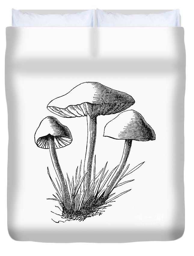 1875 Duvet Cover featuring the photograph Botany: Mushroom by Granger