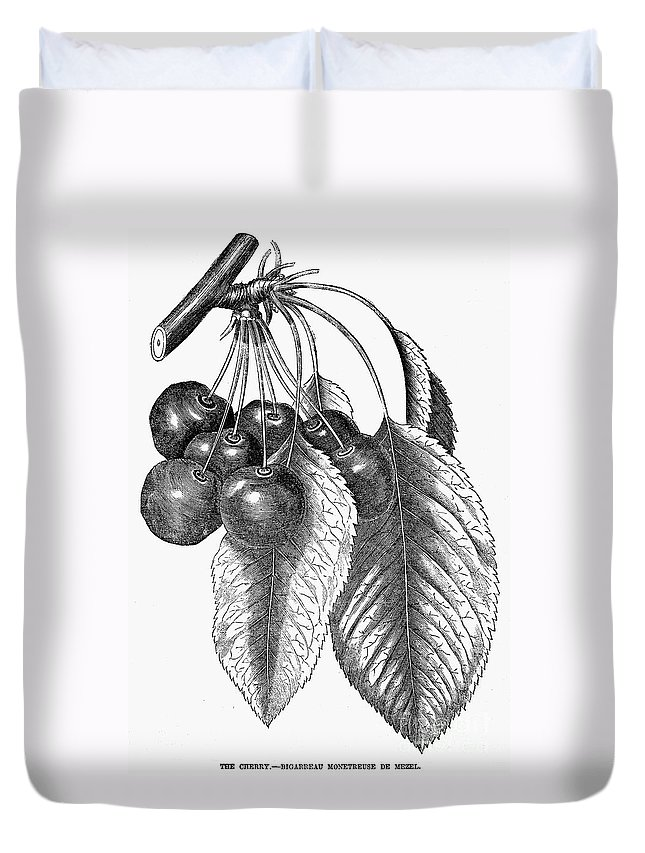 19th Century Duvet Cover featuring the photograph Botany: The Cherry by Granger