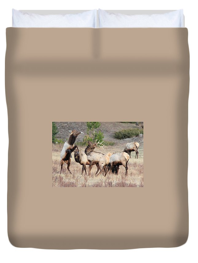 Elk Duvet Cover featuring the photograph Boxing Match by Shane Bechler