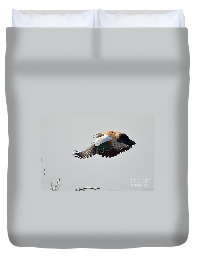 2970 Duvet Cover featuring the photograph Brahminy Shelduck by Fotosas Photography