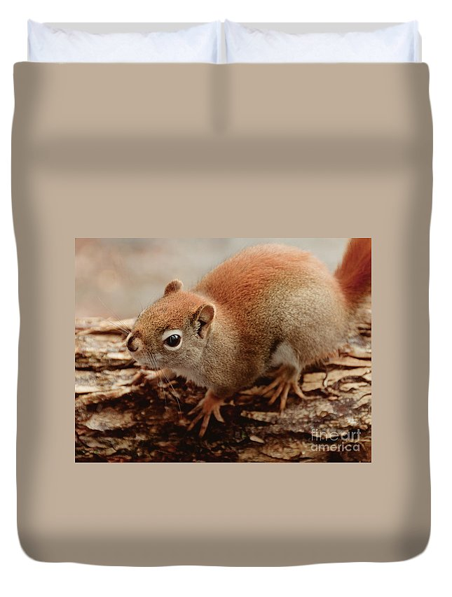 Squirrel Duvet Cover featuring the photograph Bright Eyes by Cheryl Baxter