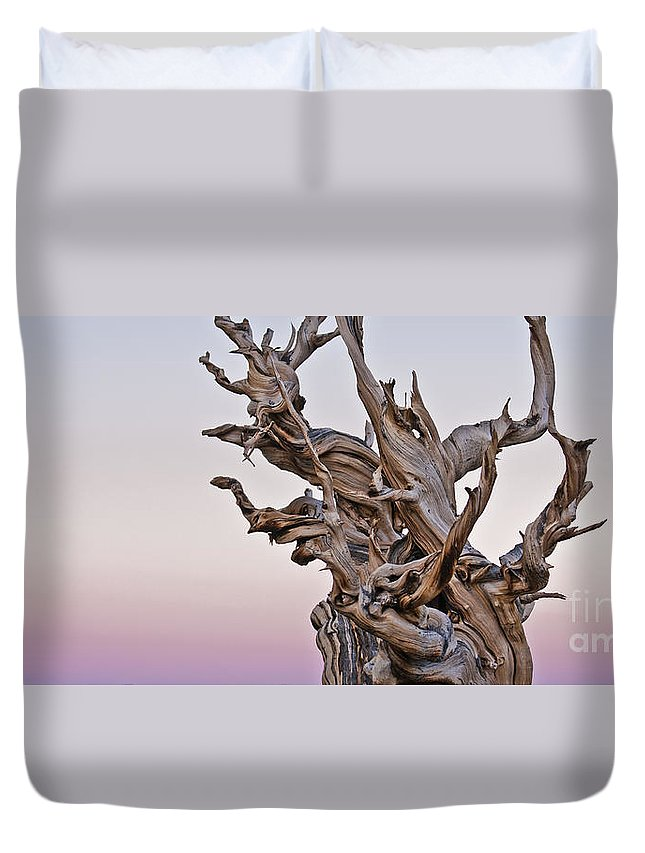Bristlecone Pine Duvet Cover featuring the photograph Bristlecone Pine - Early Morning - 1 by Olivier Steiner