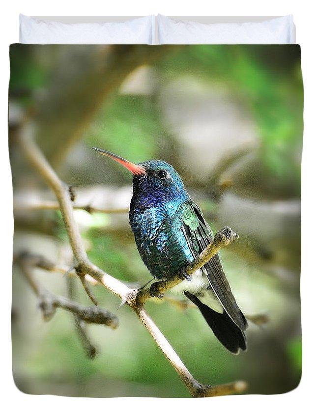 Broad Billed Hummingbird Duvet Cover featuring the photograph Broad-billed Hummingbird by Saija Lehtonen