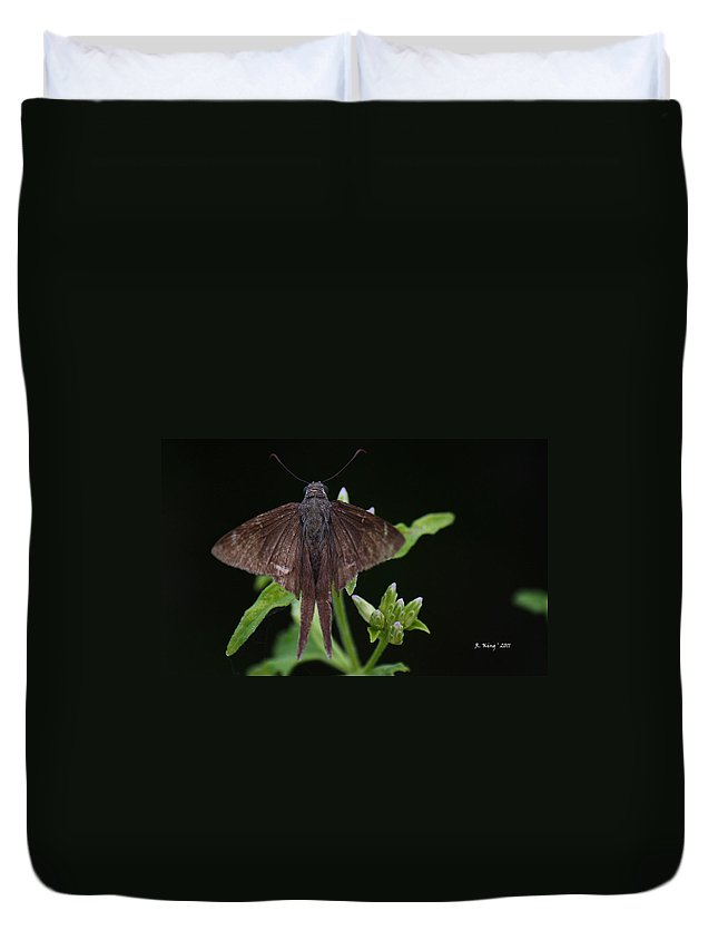 Roena King Duvet Cover featuring the photograph Brown Butterfly Dorantes Longtail by Roena King