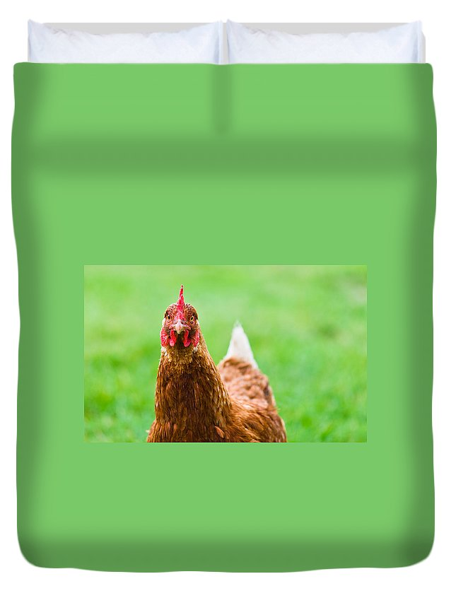 Animal Duvet Cover featuring the photograph Brown Hen On A Lawn by U Schade