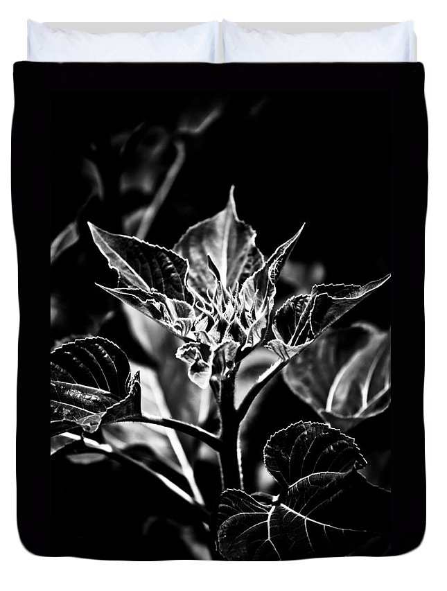 Expressionism Duvet Cover featuring the photograph Budding Sunflower by Hakon Soreide