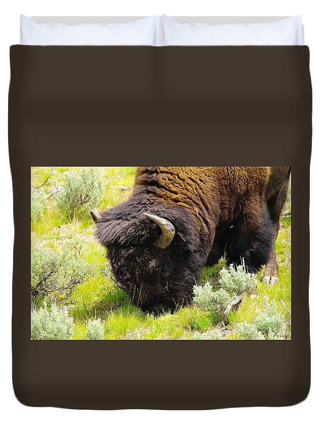 Bison Duvet Cover featuring the photograph Buffalo Grazing by Jeff Swan