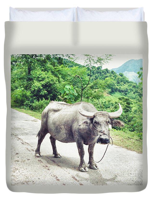 Buffalo Duvet Cover featuring the photograph Buffalo by MotHaiBaPhoto Prints