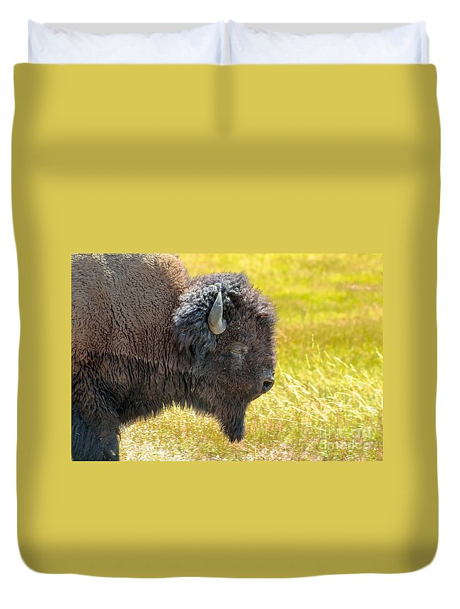 Animals Duvet Cover featuring the photograph Buffalo Portrait by Robert Bales