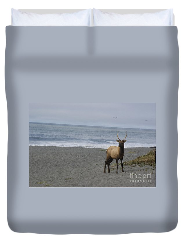 Bull Duvet Cover featuring the photograph Bull Elk On Calfornia Coast by Jim And Emily Bush