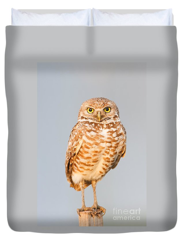 Clarence Holmes Duvet Cover featuring the photograph Burrowing Owl V by Clarence Holmes