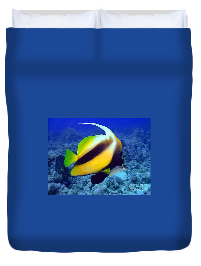 Acuminatus Duvet Cover featuring the photograph Butterfly Fish by MotHaiBaPhoto Prints