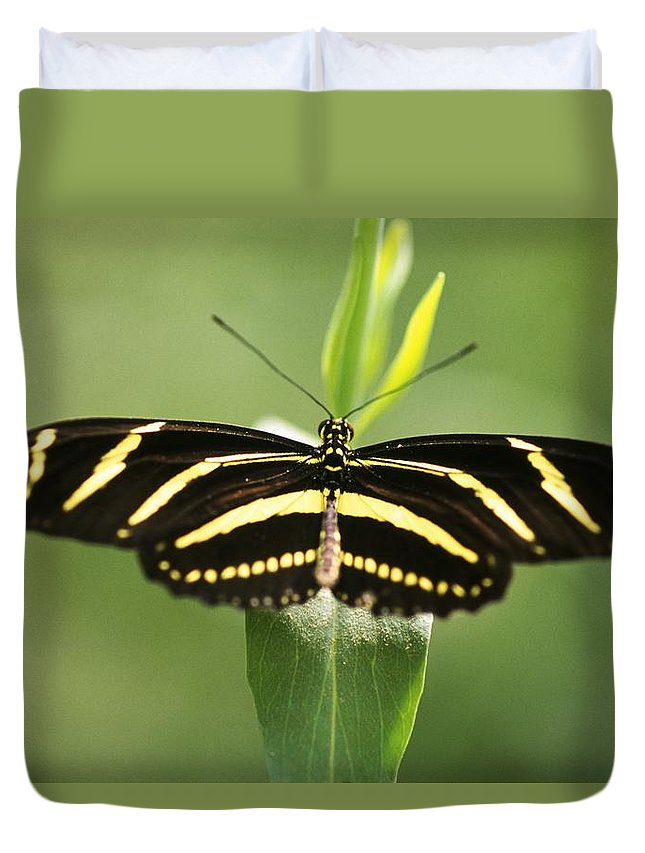Outdoors Duvet Cover featuring the photograph Butterfly by Natural Selection Craig Tuttle