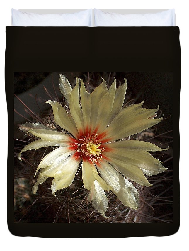 Cactus Flower Duvet Cover featuring the painting Cactus Bloom by Daniel Gale
