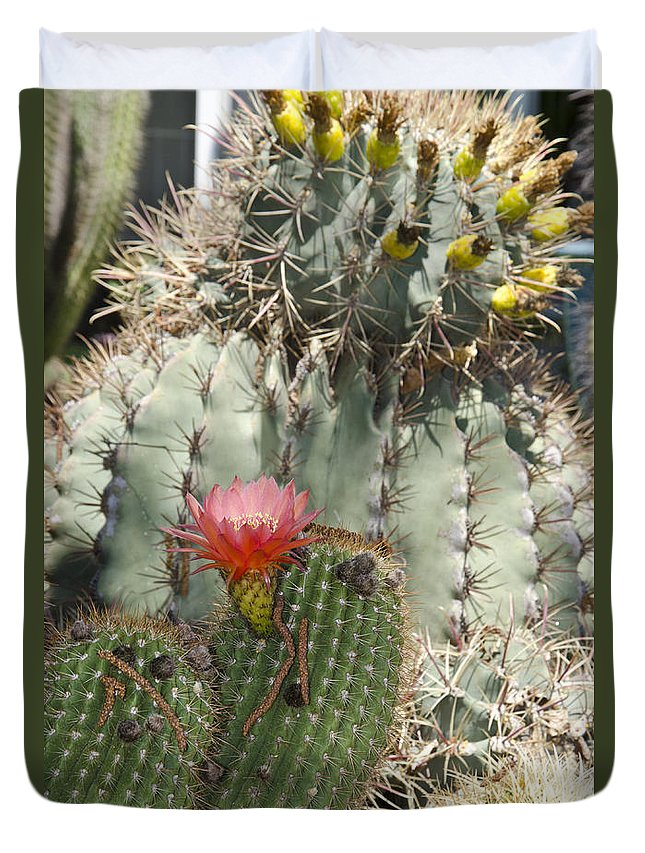Cactus Duvet Cover featuring the photograph Cactus by Jim And Emily Bush