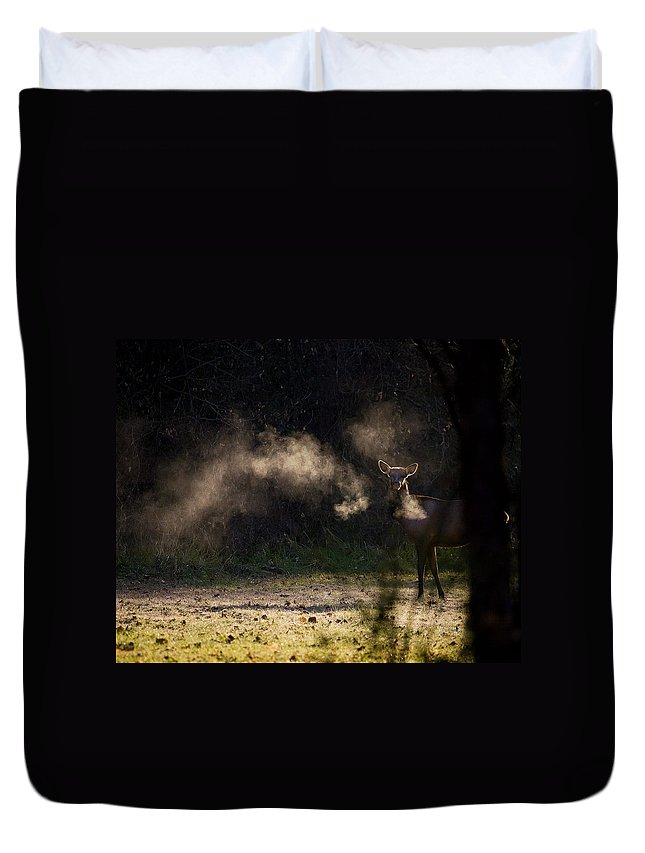 Elk Duvet Cover featuring the photograph Calf Elk With Steaming Breath At Lost Valley by Michael Dougherty