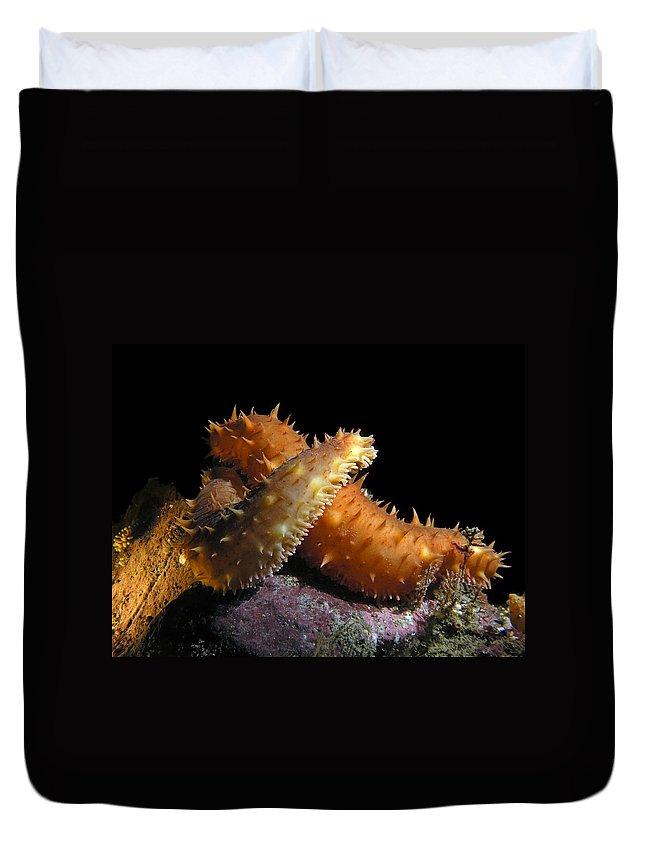 California Sea Cucumber Duvet Cover featuring the photograph California Sea Cucumber Love by Derek Holzapfel