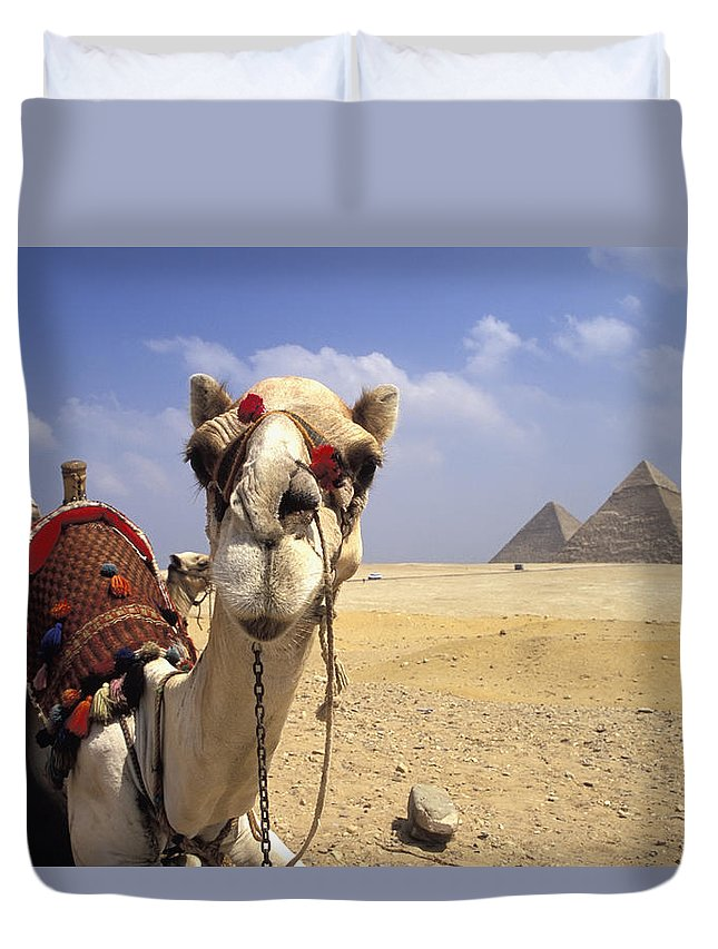 Animal Head Duvet Cover featuring the photograph Camel In Giza Egypt by Axiom Photographic