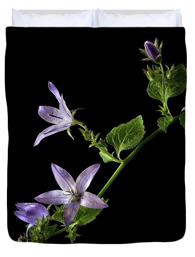 Flower Duvet Cover featuring the photograph Campanula by Endre Balogh