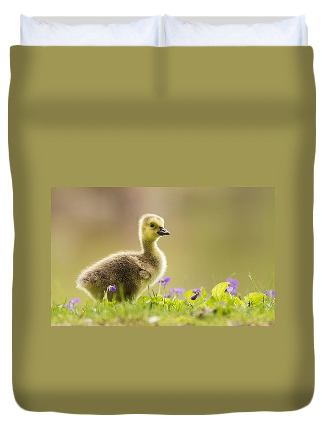 Canada Duvet Cover featuring the photograph Canada Goose Baby by Mircea Costina Photography