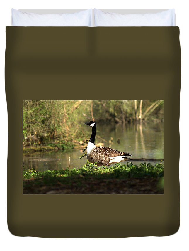 Canada Goose Duvet Cover featuring the photograph Canada Goose by Chris Day