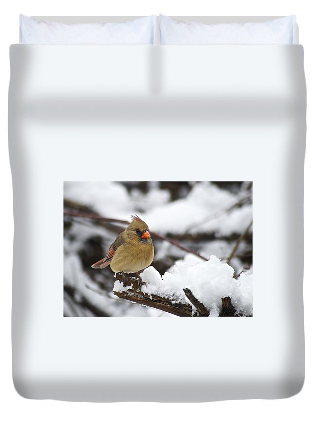 Adult Duvet Cover featuring the photograph Cardinal Female 3679 by Michael Peychich