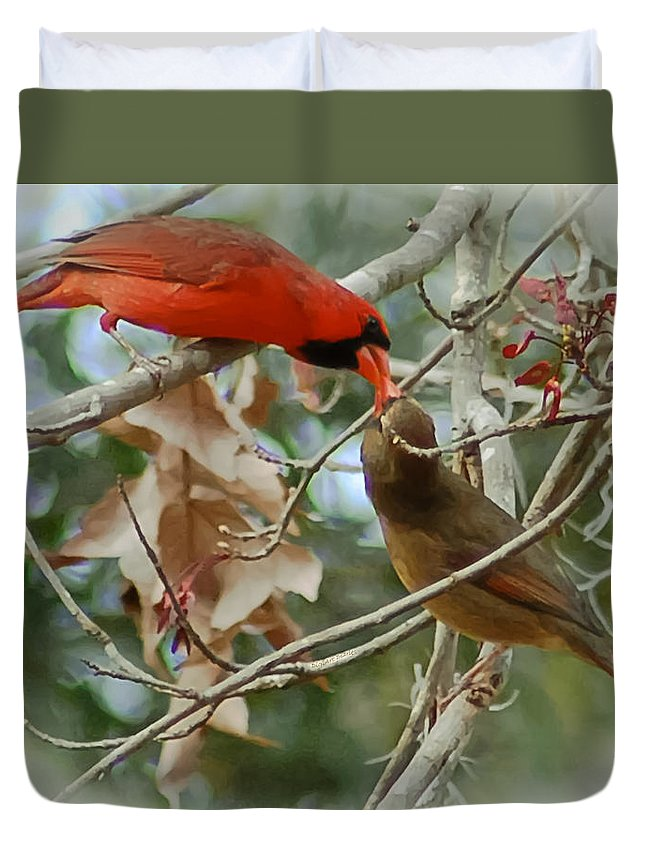 Cardinals Duvet Cover featuring the photograph Cardinal Kisses by DigiArt Diaries by Vicky B Fuller