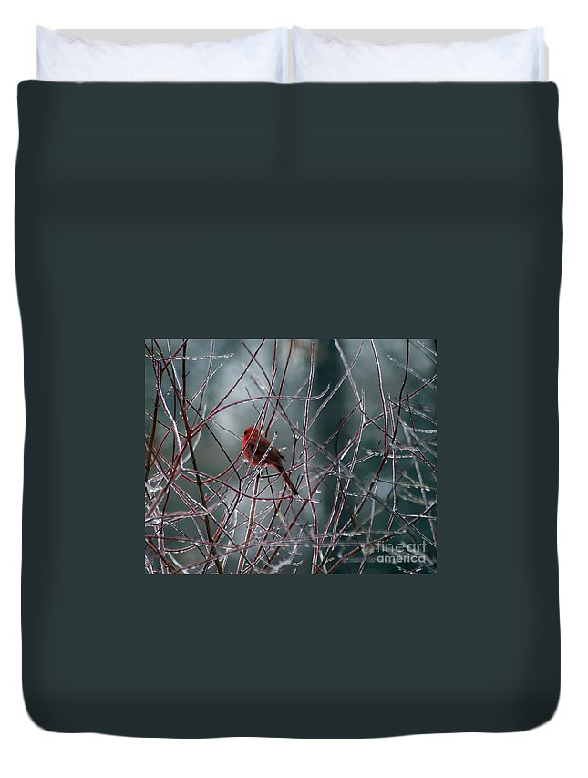 Bird Duvet Cover featuring the photograph Cardinal On Ice by Living Color Photography Lorraine Lynch