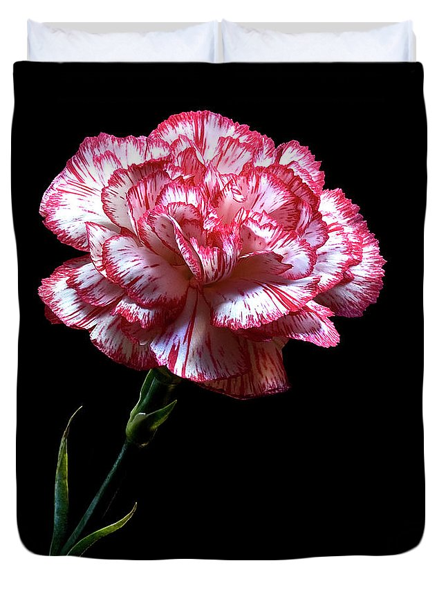 Flower Duvet Cover featuring the photograph Carnation by Endre Balogh