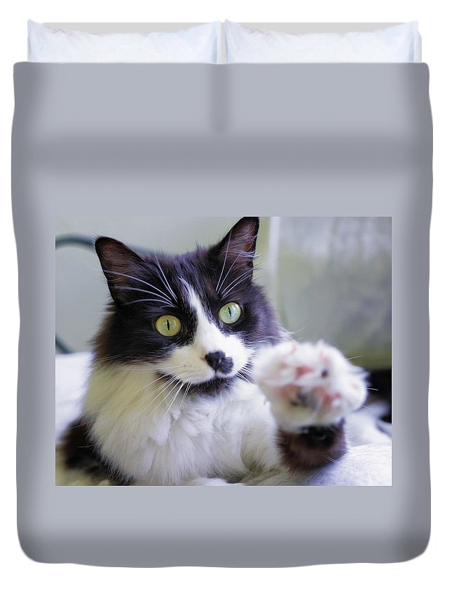 K-r Duvet Cover featuring the photograph Cat Reaches For Camera by Lori Coleman