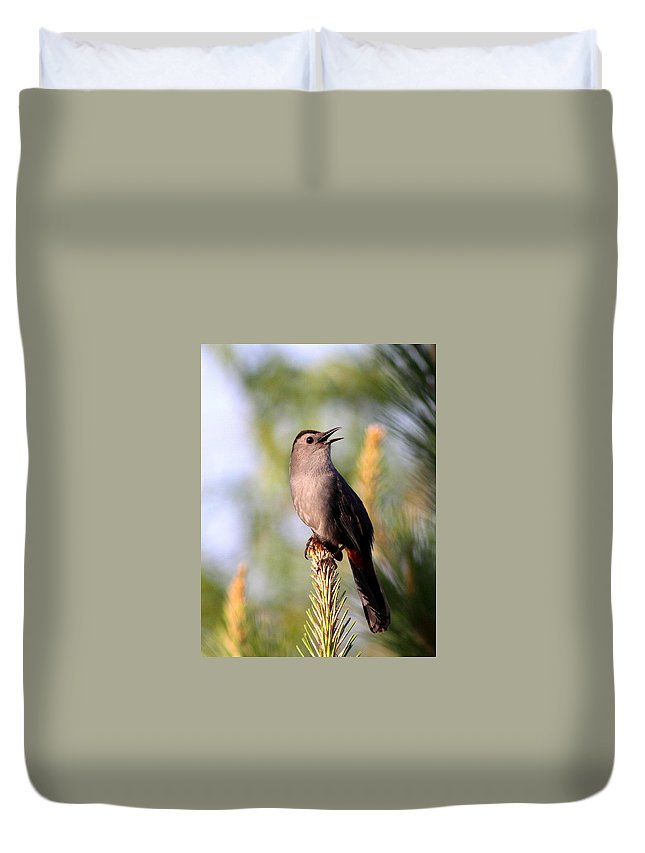 Catbird Duvet Cover featuring the photograph Catbird In Pine by Travis Truelove