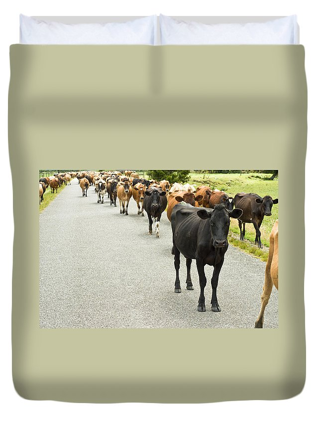 Animal Duvet Cover featuring the photograph Cattle Drive On A Road by U Schade