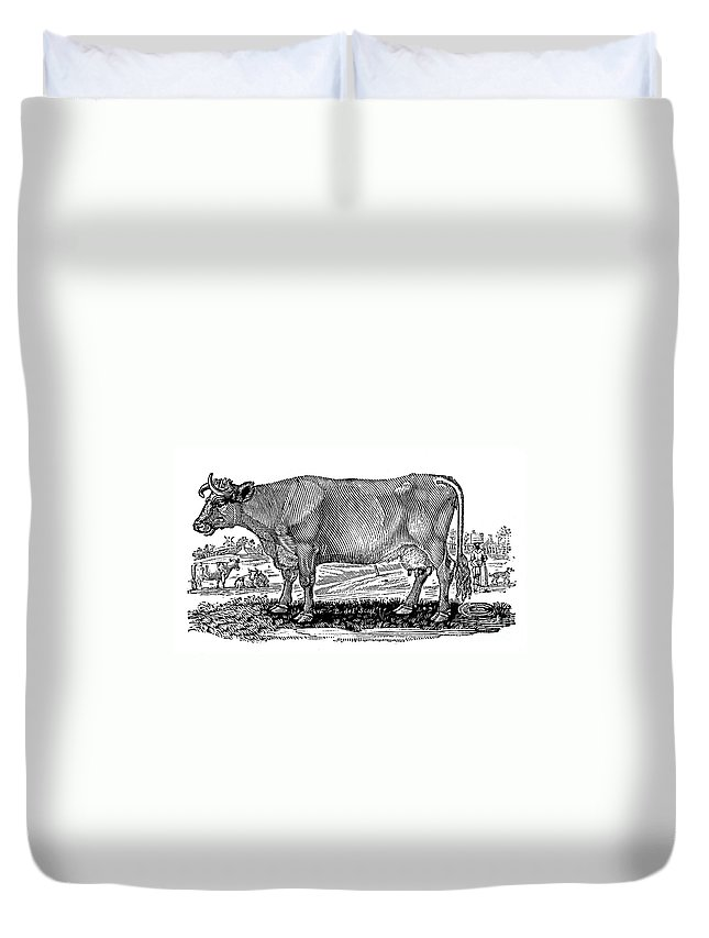 1790 Duvet Cover featuring the photograph Cattle by Granger
