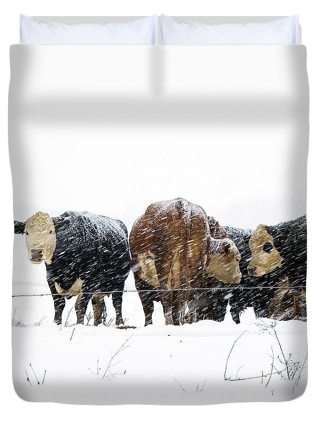 Cattle Duvet Cover featuring the photograph Cattle In A Snowstorm In Southwest Michigan by Randall Nyhof