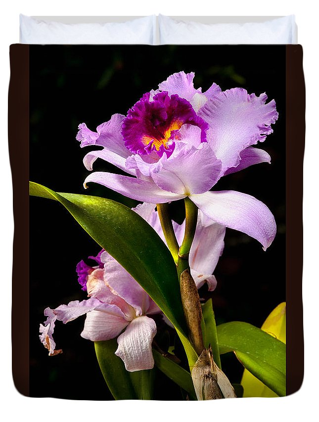 Callteya Duvet Cover featuring the photograph Cattleya by Christopher Holmes