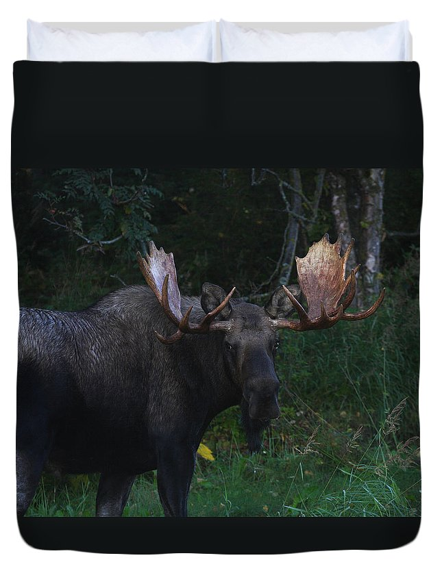 Alaska Duvet Cover featuring the photograph Checking You Out by Doug Lloyd