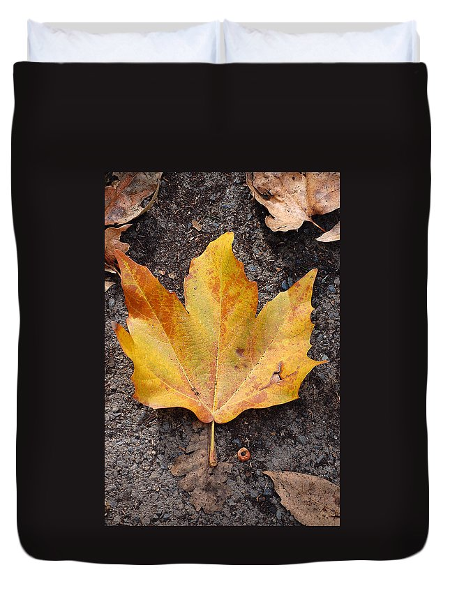 Cheerio Leaf Fall Ground Dirt Colors Chico Ca Duvet Cover featuring the photograph Cheerio Leaf by Holly Blunkall