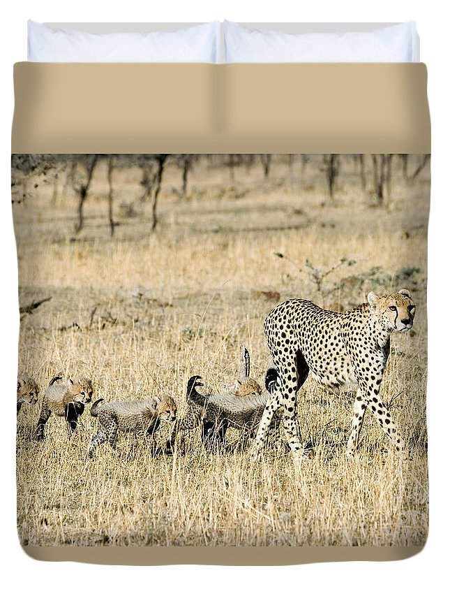 Animal Duvet Cover featuring the photograph Cheetah Mother And Cubs by Gregory G Dimijian MD