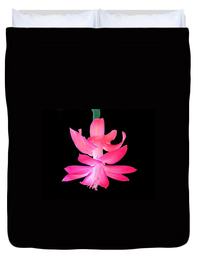Flower Duvet Cover featuring the photograph Christmas Cactus by Steven Clipperton