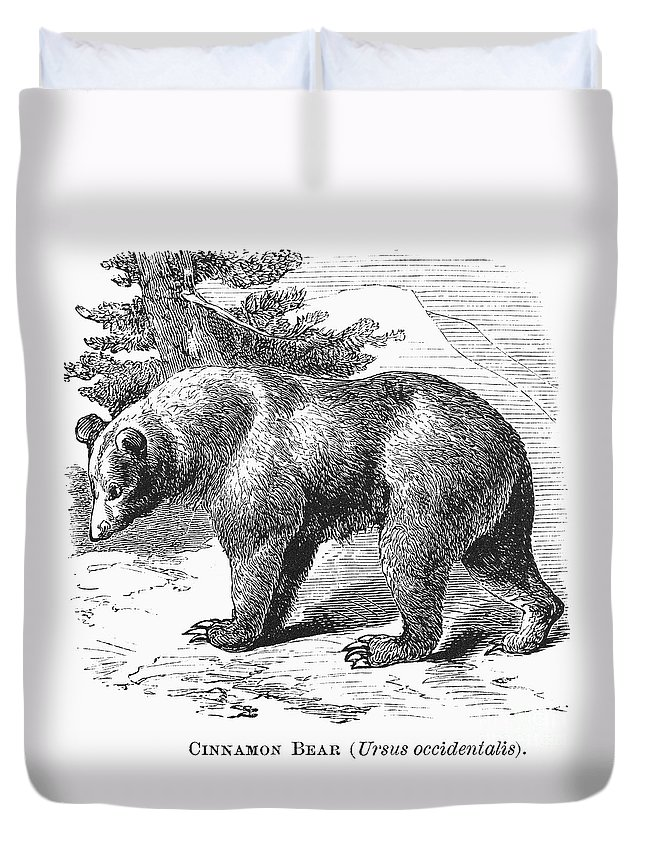 19th Century Duvet Cover featuring the photograph Cinnamon Bear by Granger