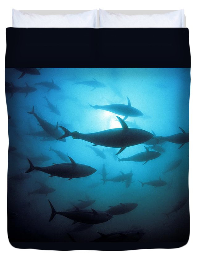 Animal Art Duvet Cover featuring the photograph Circling Bluefin Tuna by Dave Fleetham - Printscapes