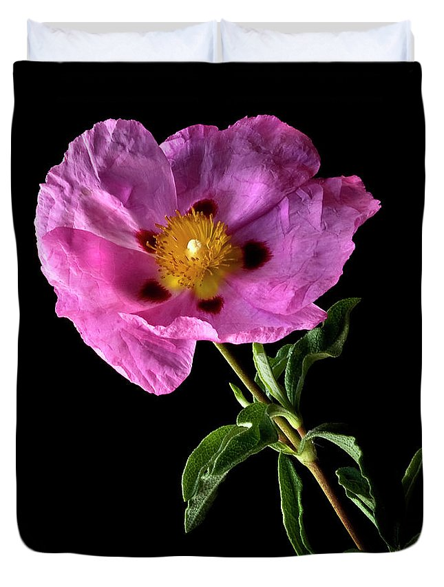 Flower Duvet Cover featuring the photograph Cistus by Endre Balogh